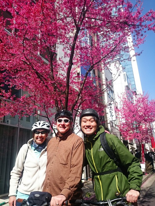 Tokyo Cherry Blossoms Cycling Tour