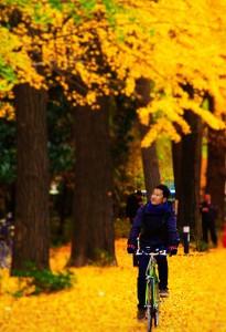 東京サイクリングツアー新ルート